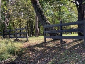 Pine fence treated with tannin and ferrous sulfate to give it an aged look.